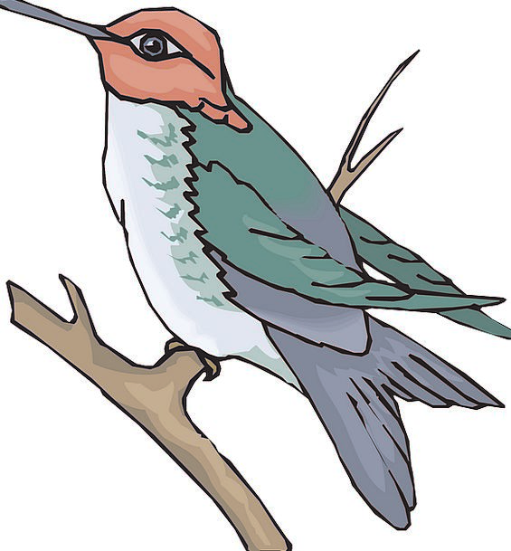 Bird Fowl Division Wings Annexes Branch Hummingbir