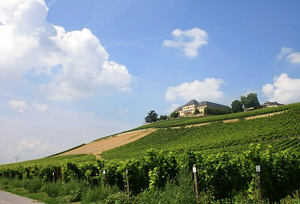 Schloss Johannisberg Landscapes Winery Nature Vine