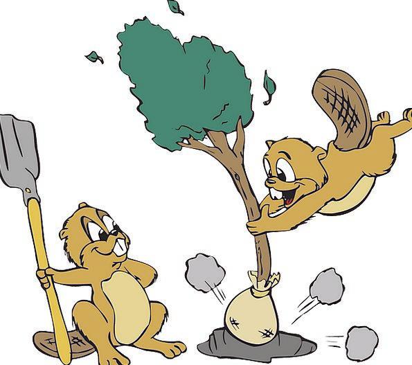 Animals Faunae Landscapes Sapling Nature Shovel Sp