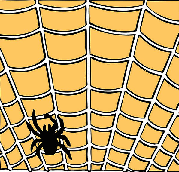 Spiderweb Landscapes Nature Orange Carroty Spider