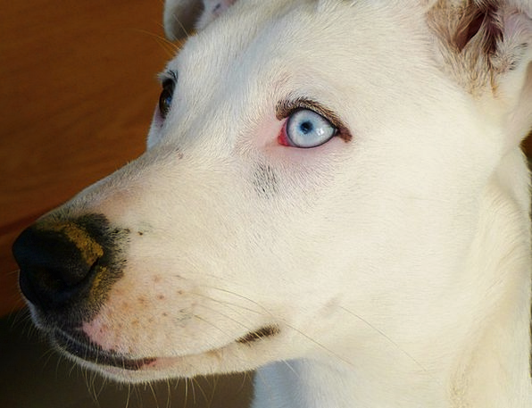 Dog Canine Domesticated Snout Pet Eyes Judgments N
