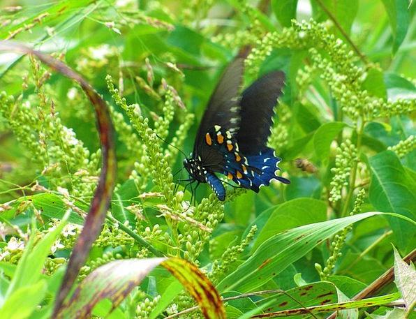 Butterfly Landscapes Azure Nature Black Dark Blue