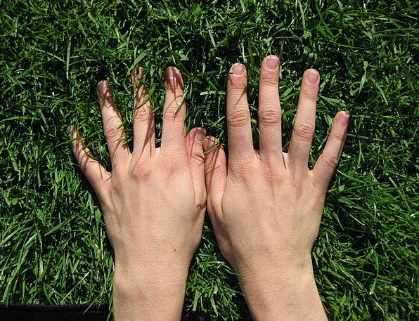 Hand Pointer Pointers Grass Lawn Hands Finger Digi