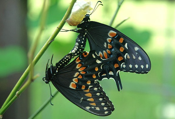 Butterfly Bug Nature Countryside Insect Life Black
