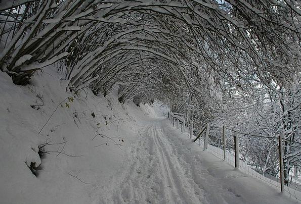 Winter Season Bushes Snow Snowflake Shrubs Covered