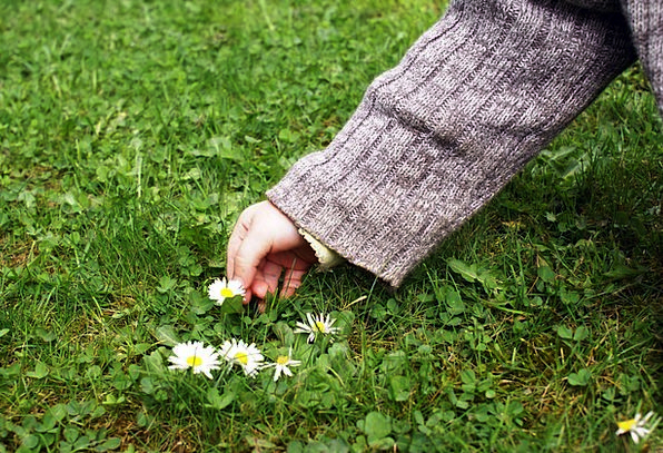 Child'S Hand Daisy Pick Flowers