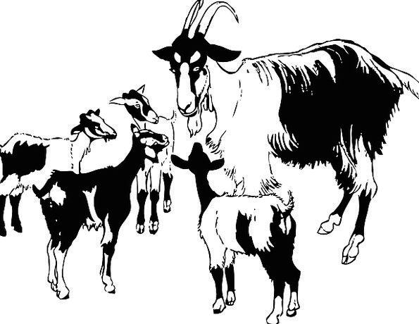 Goat Children Animal Physical Kids Horns Sirens Do