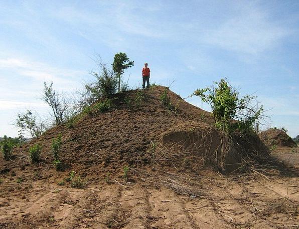 Africa Landscapes Nature Unusual Rare Giant Ant Hi