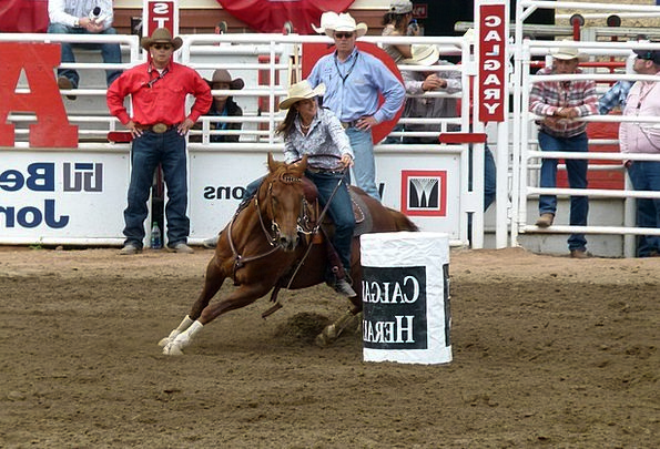 Barrel Racing Stampede Charge Calgary Horse Mount
