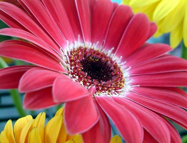 Flower Floret Landscapes Cheerful Nature Red Blood