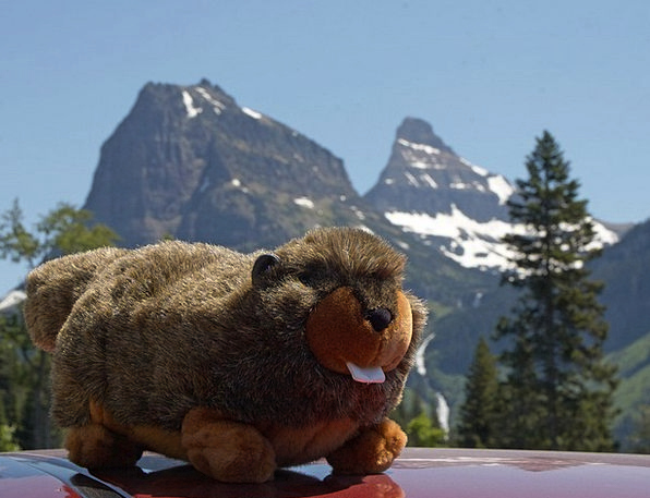 Soft Toy Teddy Mountains Crags Marmot Fur Hair Sof