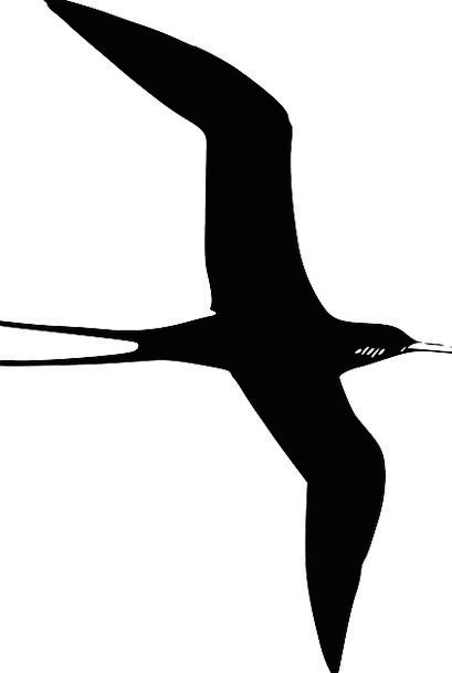 Tern Frigate Purple Martin Bird Silhouette Free Ve