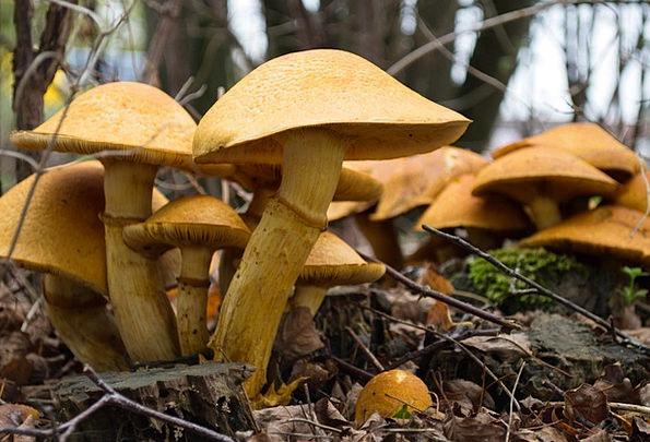 Mushrooms Burgeons Landscapes Burgeon Nature Autum
