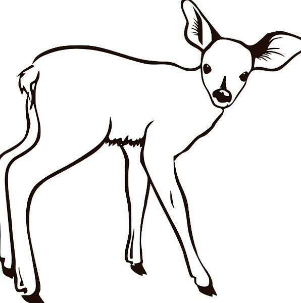 Deer Physical White Snowy Animal Free Vector Graph