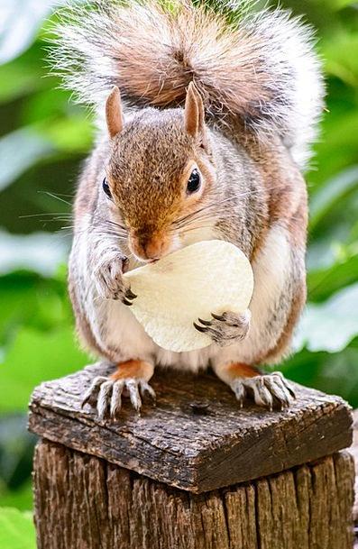 Squirrel Collector Landscapes Nature Eating Consum