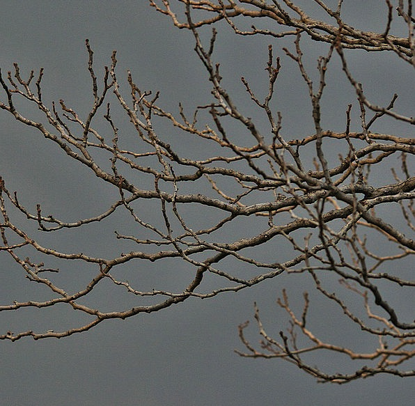 Bare Branches Sapling Branches Tree Twigs Gloomy B