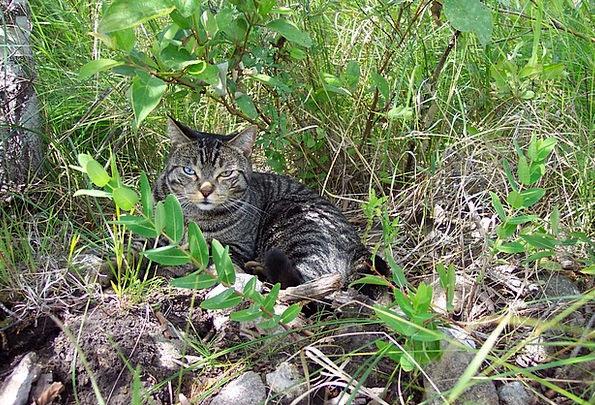 Cat Catlike Tabby Feline Eyes Judgments Farm Sleep