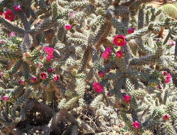 Cactus Landscapes Nature Bloom Cactus Blossom Flow