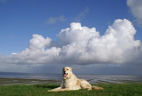 Dog Canine Dike Bank North Sea Nordfriesland