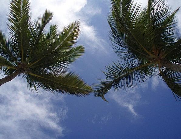 Palms Tributes Landscapes Nature Sky Blue Caribbea
