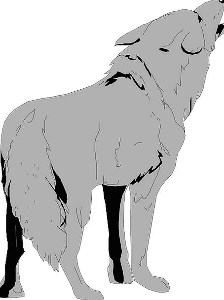 Gray Leaden Physical Tail End Animal Fur Hair Coyo