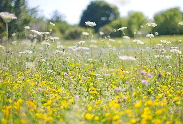 Wildflowers Weeds Creamy Flower Field Yellow Flowe
