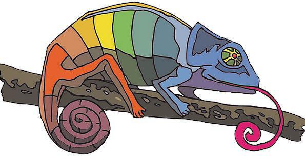 Branch Division Multicolored Colors Insignia Rainb