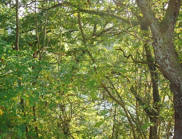 Denmark Landscapes Plants Nature Forest Woodland T