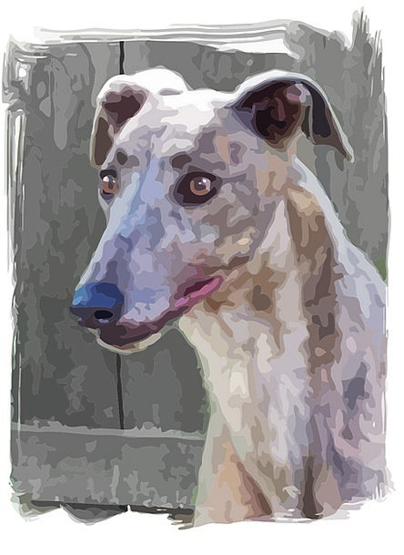 Dog Canine Representation Alert Attentive Portrait
