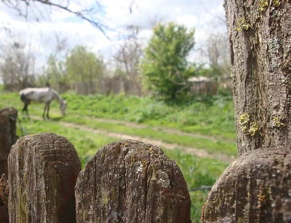 Fence Barrier Lime Horse Mount Green