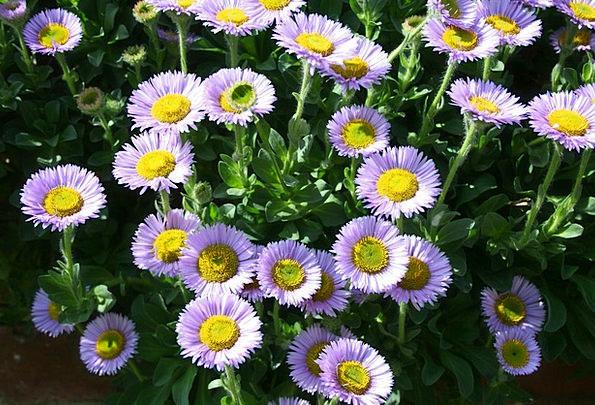 Flower Floret Elaborate Attractive Good-looking Pu