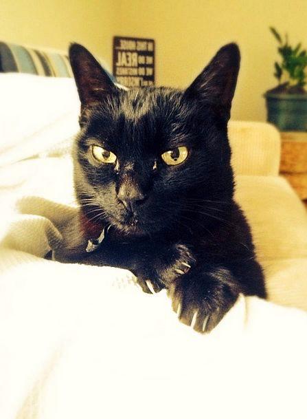 Cat Dark Feline Catlike Black Animal Physical Pet