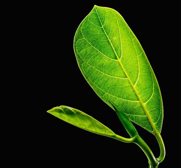 Journal Periodical Greeneries Jack Fruit Leaf Leav
