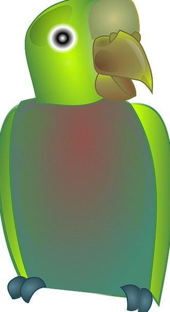 Parrots Imitators Natures Green Lime Birds Intelli