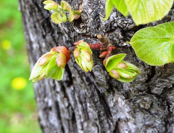 The Buds Landscapes Countryside Nature Bud Sprout