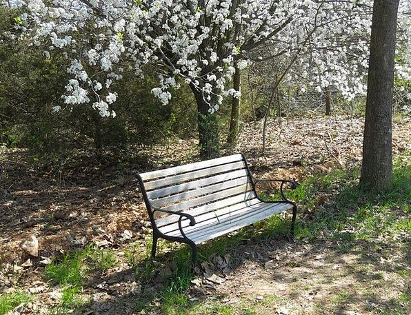klupa nekoga čeka - Page 4 Bench-Seat-Landscapes-Nature-Park-Bench-Nature-Fre-3960