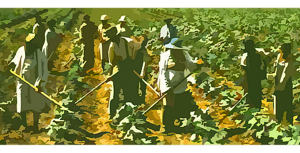 Farming Undeveloped Drink Arena Food Workers Labor