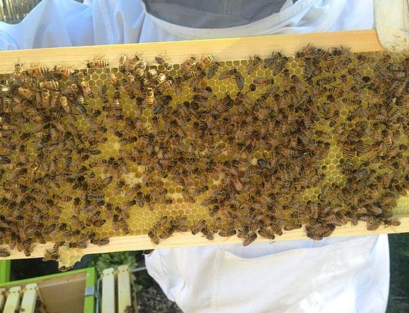 Beekeeper Darling Bees Honey Beekeeping Beehive Ap
