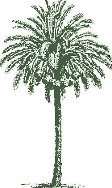 Date Day Tribute Tree Sapling Palm Arabian Date-Pa