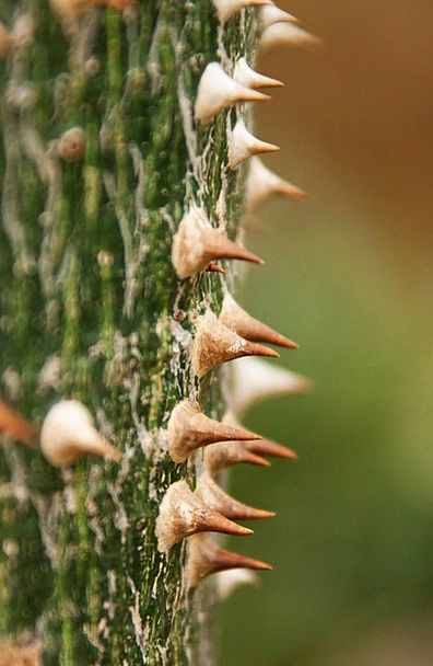 Wood Timber Landscapes Vegetable Nature Flora Vege