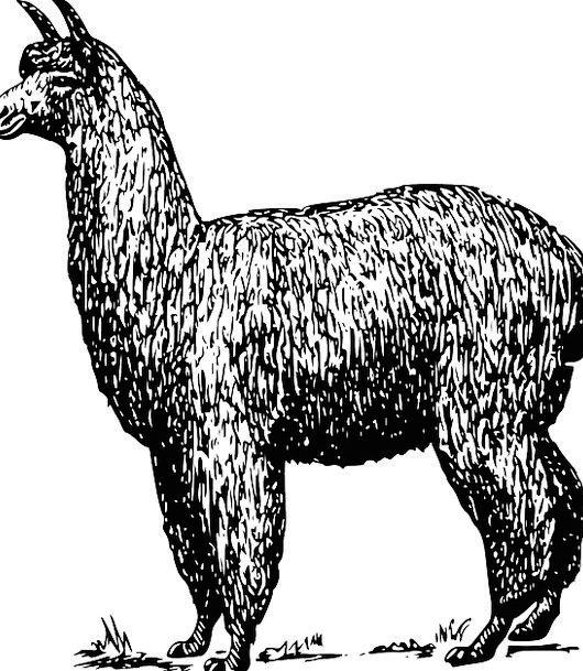 Alpaca Animal Physical Llama Farm Farmhouse Furry