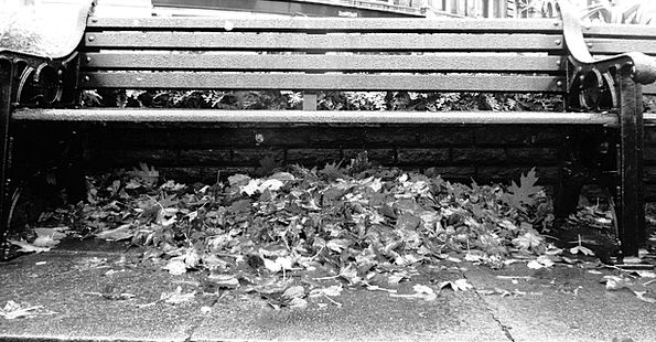 Fall Reduction Leaves Greeneries Bench Black And W