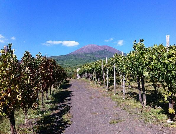 Vineyard Winery Vesuvius Volcano Naples Volcanic G