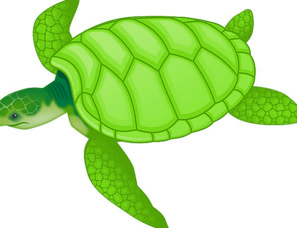 Tortoise Lime Reptiles Green Land Turtles Covering
