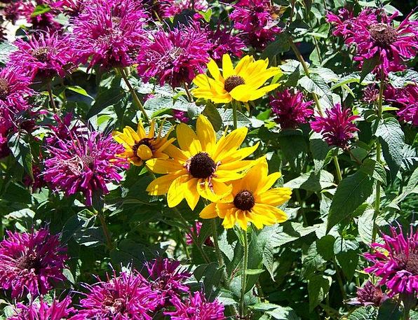 Flowers Plants Landscapes Creamy Nature Pink Flush