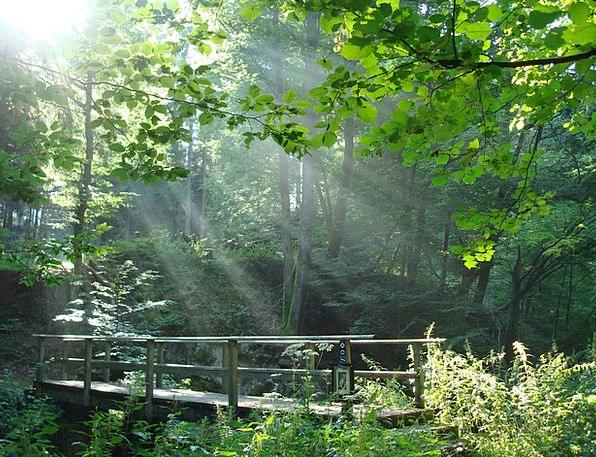 Bridge Bond Landscapes Woodland Nature Bach Forest