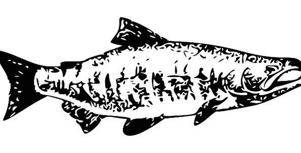 Salmon Angle Animal Physical Fish Cooked Food Nour