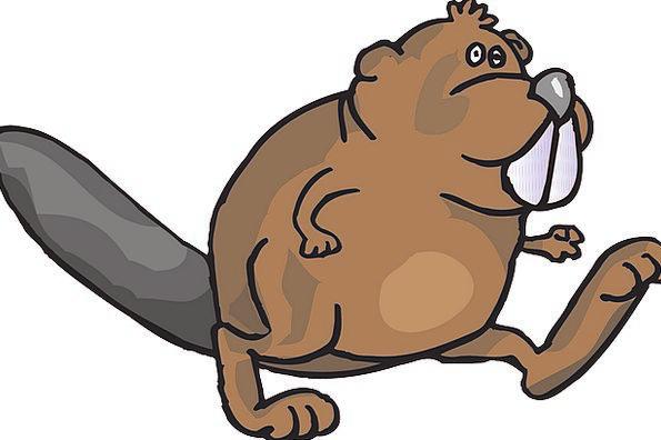 Beaver Work Animal Physical Walking Movement Drive