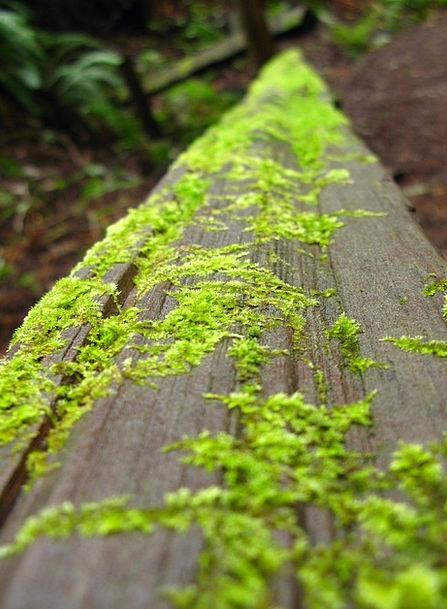 Moss Landscapes Nature Log Record Lichen Wood Timb
