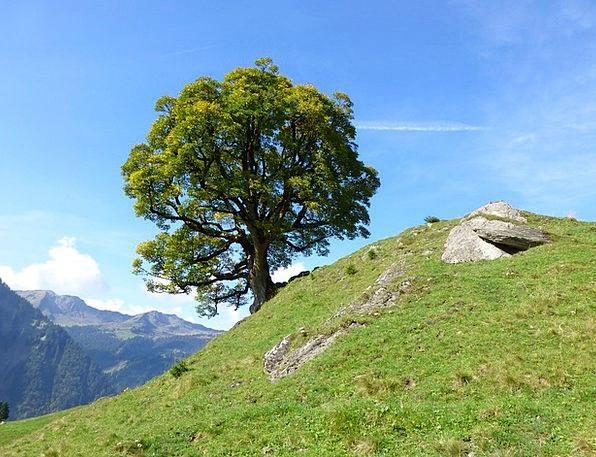 Tree Sapling Landscapes Mountaineering Nature Natu